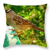 Sparrow In Morning Light  Throw Pillow