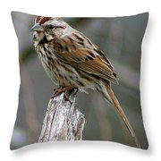 Sparrow Iv Throw Pillow