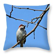 Sparrow On The Branch Throw Pillow
