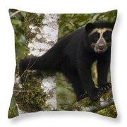 Spectacled Bear Tremarctos Ornatus Cub Throw Pillow