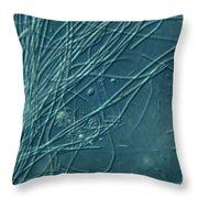 Sphaerotilus Bacteria Throw Pillow