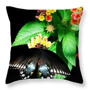 Spice Bush Swallowtail  Throw Pillow