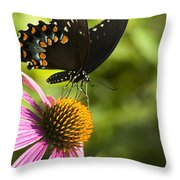 Spicebush Swallowtail Butterfly And Coneflower Throw Pillow