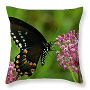 Spicebush Swallowtail Din039 Throw Pillow