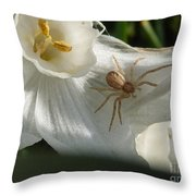 Spider In Narcissus Throw Pillow