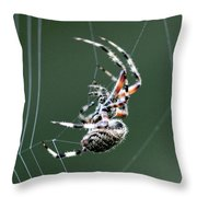 Spider - The Spinner Throw Pillow