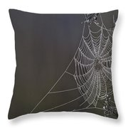 Spider Web Covered In Dew Drops Throw Pillow