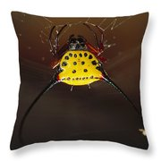 Spiked Spider Gasteracantha Sp In Web Throw Pillow