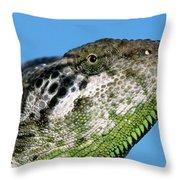 Spiny Chameleon Chamaeleo Verrucosus Throw Pillow