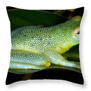 Spiny Glass Frog Throw Pillow