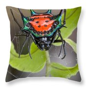 Spinybacked Orbweaver Spider Solomon Throw Pillow