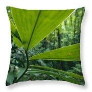 Spiral Ginger Costus Pulverulentus Throw Pillow