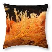 Spiral-tufted Bryozoan Throw Pillow