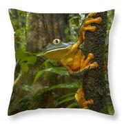 Splendid Leaf Frog  Costa Rica Throw Pillow