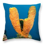 Sponge Trio Throw Pillow