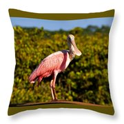 Spoonbill Throw Pillow by David Lee Thompson