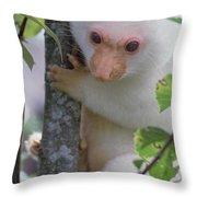 Spotted Cuscus Phalanger Maculatus Throw Pillow