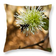 Spotted Moth On Fothergilla Throw Pillow