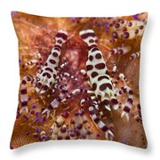Spotted Periclimenes Colemani Shrimp Throw Pillow