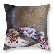 Spotted Porcelain Crab Feeding Throw Pillow by Steve Jones