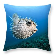 Spotted Porcupinefish Throw Pillow
