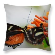 Spotted Tiger Glassywing Throw Pillow