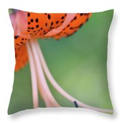 Spotted Tiger Throw Pillow