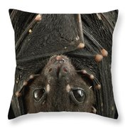 Spotted-winged Fruit Bat Balionycteris Throw Pillow