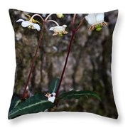 Spotted Wintergreen Plants Throw Pillow