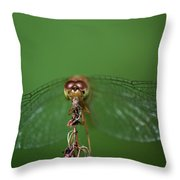 Spread Your Wings And Fly Away Throw Pillow