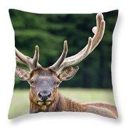 Spring Antlers Throw Pillow