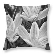 Spring Crocus In Black And White Throw Pillow