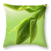 Spring Green Leaves Throw Pillow by Elena Elisseeva