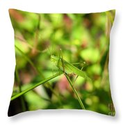 Spring Hopper Throw Pillow