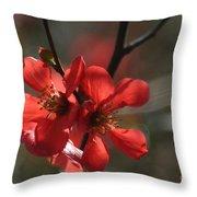 Spring Pop Throw Pillow