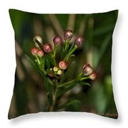 Spring Sprig Throw Pillow