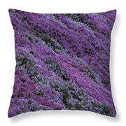 Springtime Phlox Brightens A Roadside Throw Pillow
