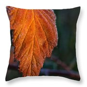 Sprinkled Frost Throw Pillow
