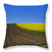 Sprouting Field Of Sunflowers And Field Of Rape. Auvergne. France. Europe Throw Pillow