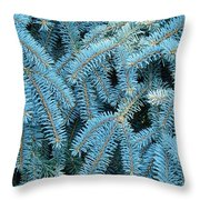 Spruce Conifer Nature Art Prints Trees Throw Pillow
