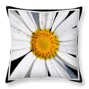 Square Daisy - Close Up 2 Throw Pillow