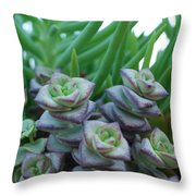 Squarely Purple Succulent Crassula Baby Necklace Throw Pillow