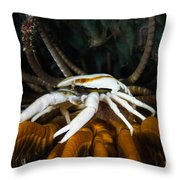 Squat Lobster Carrying Eggs, Indonesia Throw Pillow