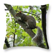 Squirrel I Throw Pillow