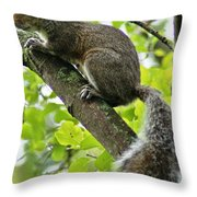 Squirrel IIi Throw Pillow