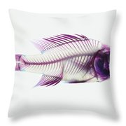 Stained Rockbass Fish Throw Pillow