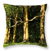 Stand Of Rainbow Eucalyptus Trees Throw Pillow
