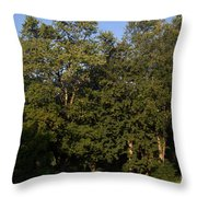 Stand Of Sugar Maple Trees Throw Pillow