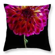 Stand Up Dahlia Throw Pillow