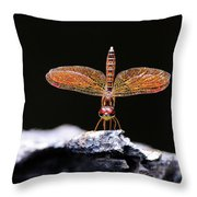Standing In The Mornig Light Throw Pillow